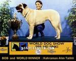 kangal resimleri kangal dövüşü köpek dövüşü14