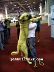 kangal resimleri kangal dövüşü köpek dövüşü36