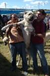 kangal resimleri kangal dövüşü köpek dövüşü5