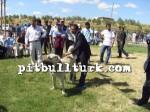 kangal resimleri kangal dövüşü köpek dövüşü79