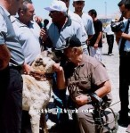 kangal resimleri kangal dövüşü köpek dövüşü99